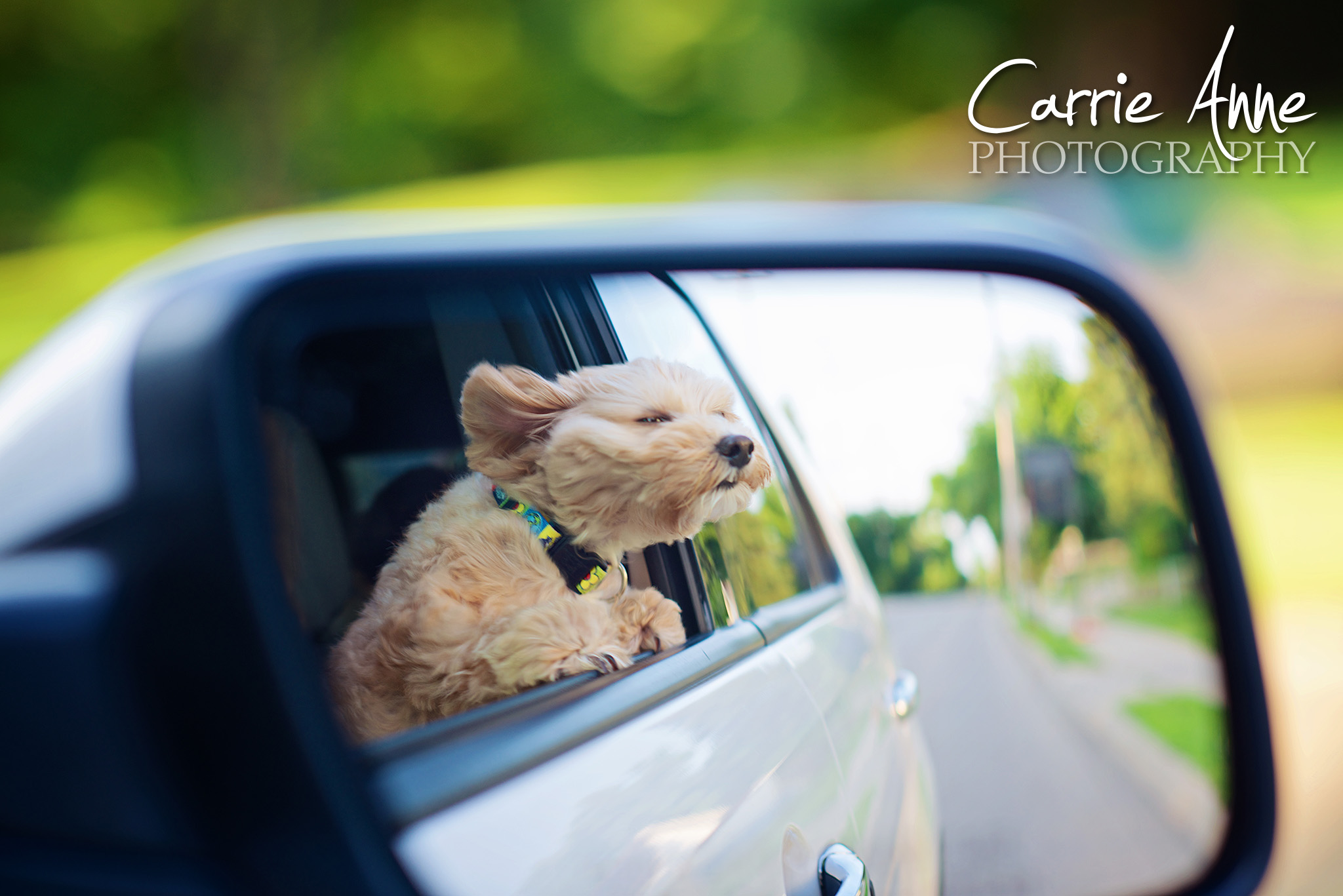 dog-in-mirror-carrie-anne-photography